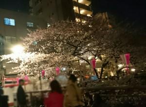 201604sakura3